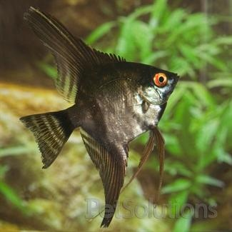 17 best images about fishin 39 around on pinterest neon for Aggressive fish for sale