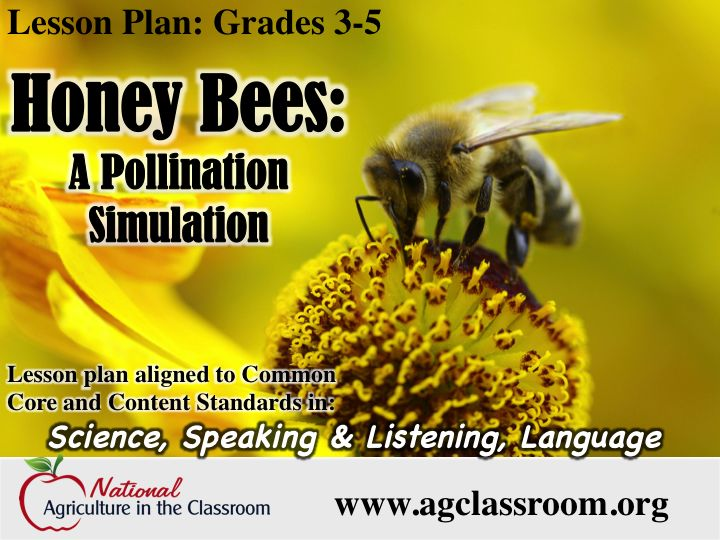 Fantastic lesson plan teaching about bees and pollination! Includes links and instructions for class activities.