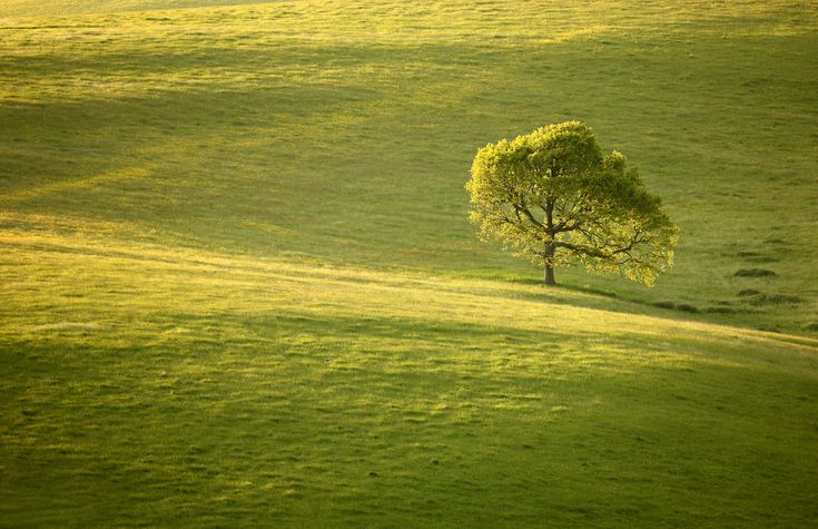 https://flic.kr/p/eDA5d3 | Solitude | © 2013 Alan Mackenzie.  www.alanmackenziephotography.com  The fields surrounding Ridge Road, Falmer are some of the more interesting sights on the South Downs. Isolated trees, copses and Hawthorn hedges grow across this gentle, small scale landscape. The late evening sun modelled Stanmer Down beautifully. How lucky we are to live so close to a jewel in the crown of an Area of Outstanding Natural Beauty.