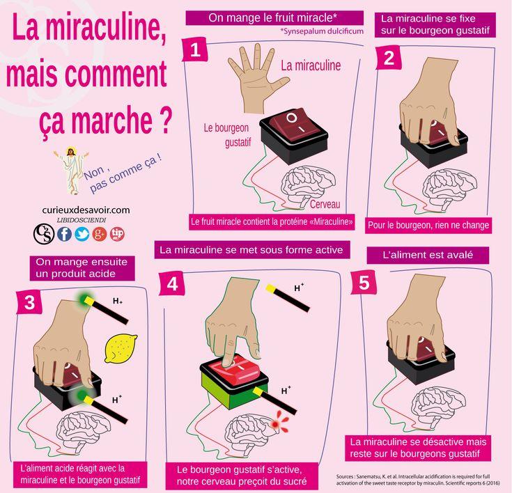 Miraculine mécanisme
