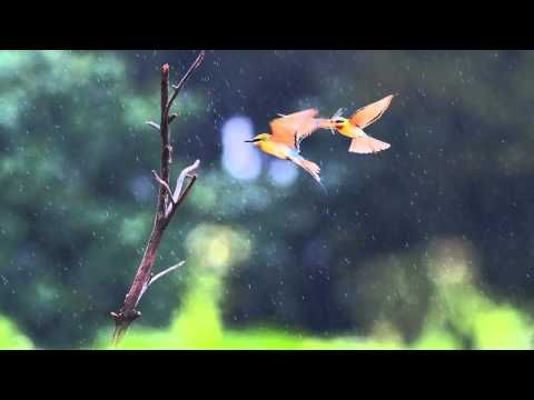 Relaxing Sounds | Birds in The Rain | Meditation Bowls Music play in Background for Sleep Spa Study - YouTube