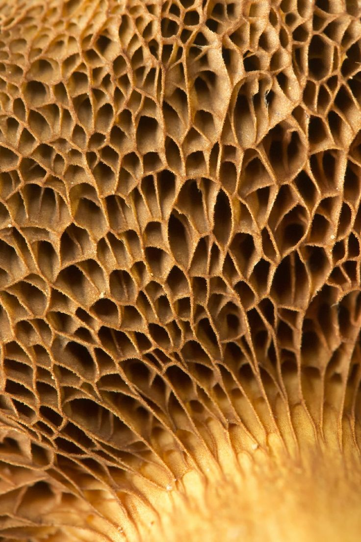 "Fungi #texture #inspiration #officetrends A mushroom walks into a bar and the bartender says, ""Sorry, we don't serve mushrooms in here."" The mushroom replies, ""Why not? I'm a fungi!"""