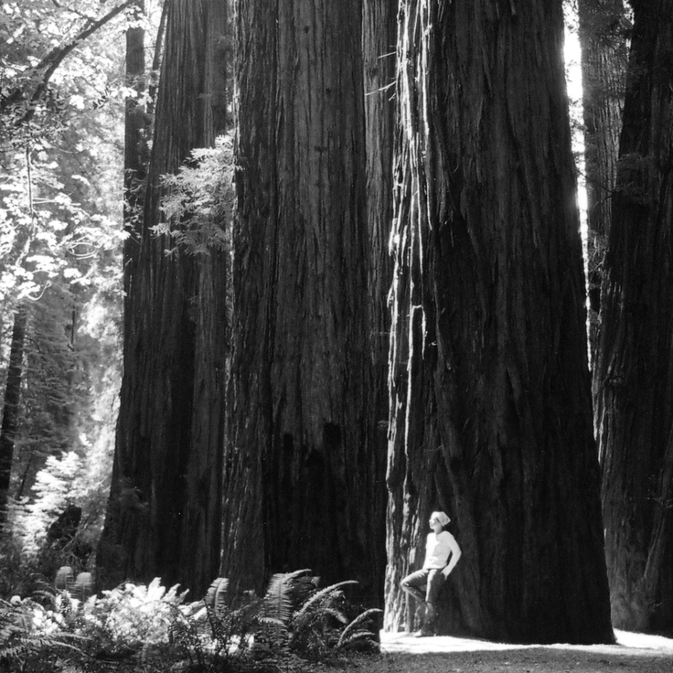 One of the first self portraits I ever took (so long ago that I actually took this with black and white film!) This is in Redwood National Forest in California. The trees were indescribable....Truly an awe-inspiring sight. #greatwalker