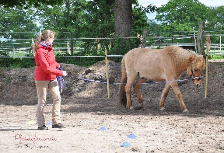 Hier erfährst du, wie du die Muskeln deines Pferdes vom Boden aus stärken und dein Pferd auch ohne Reiten fit machen kannst!