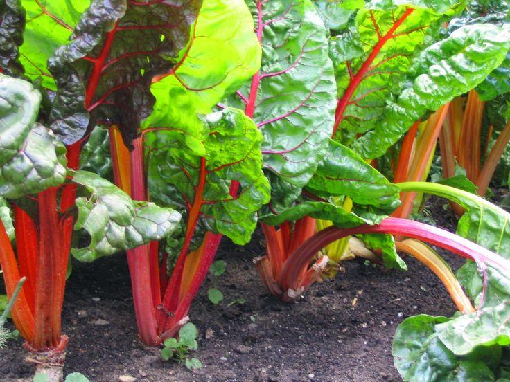Peterborough and Area Master Gardeners