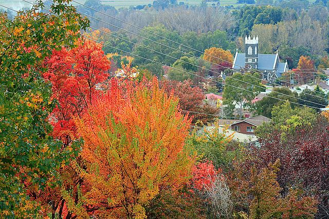 Tumut in Autumn by Wings and Wheels, via Flickr.  Tumut  is a town in the Riverina region of New South Wales, Australia, situated on the banks of the Tumut River. Tumut is at the foothills of the Snowy Mountains