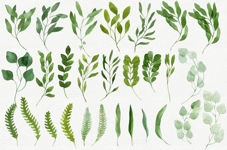 Here is a lovely collection of 28 green leaves and branches, hand-painted with watercolor. They will be handy for making your own design projects, elegant wedding invitations, greeting