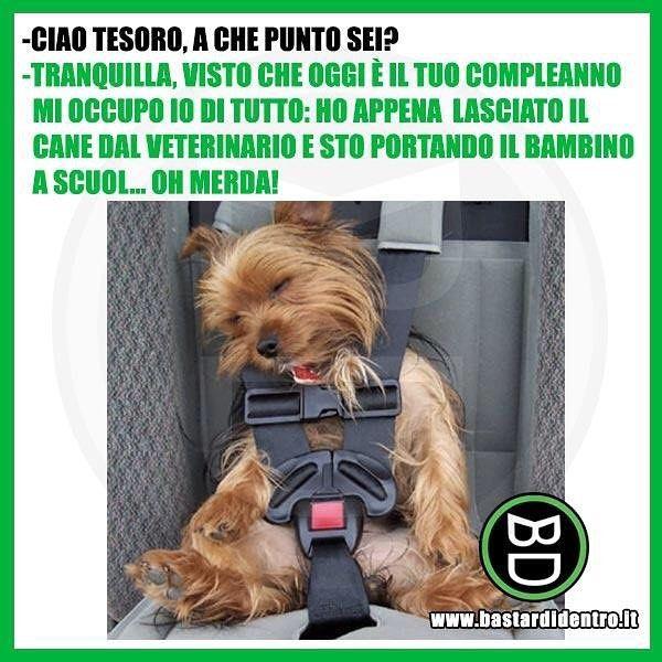 Nel giorno del suo #compleanno sorprendi la tua dolce metà! #bastardidentro #cane Scarica gratis l'app ufficiale di bastardidentro per…