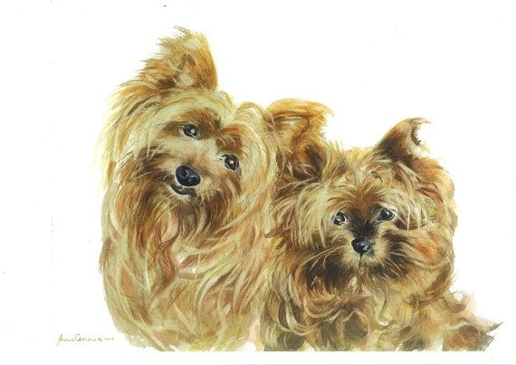 Terriers Watercolour Print - A4 - Two Scamps, Yorkshire Terriers, 5% of profits to Cornwall Air Ambulance Trust #dogs #art