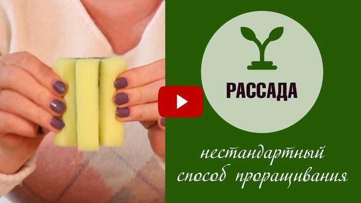 Проращивание семян в губках ❗ Эксперимент хитсад ❗посадка выращивание и ...