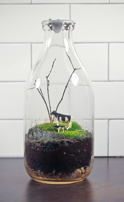 40 Best Custom Terrarium Images On Pinterest Garden Terrarium Adorable Milk Bottle Decorating Ideas