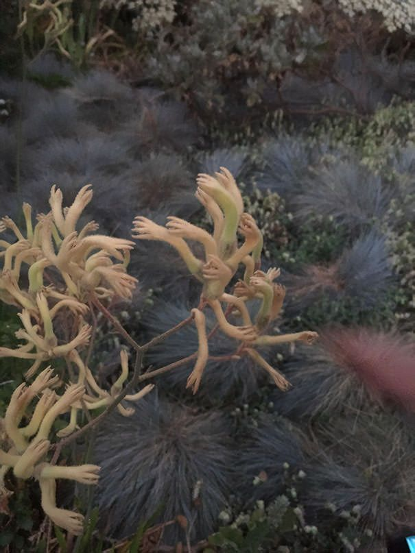50 Horrifying Times Nature Was Super Terrifying And Made Us Say Nope Scary Nature Plants