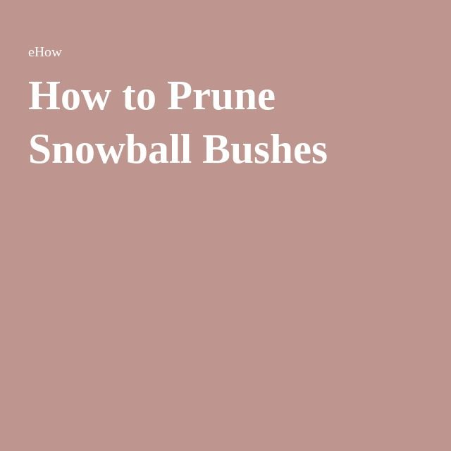 How to Prune Snowball Bushes vs Annabelle Hydrangeas.
