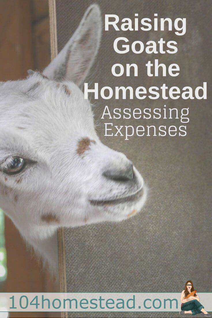 Many people are not raising goats to earn massive profit, but taking stock of cost versus benefit is essential to making the most of your time and money.