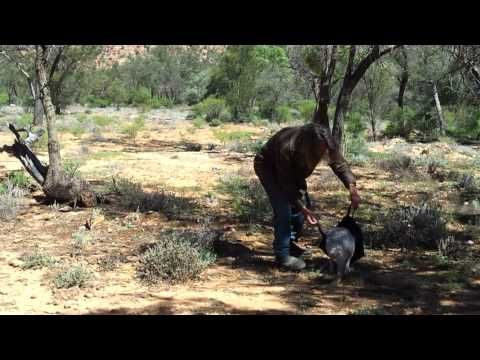 How to catch a kangaroo. I just have no words...