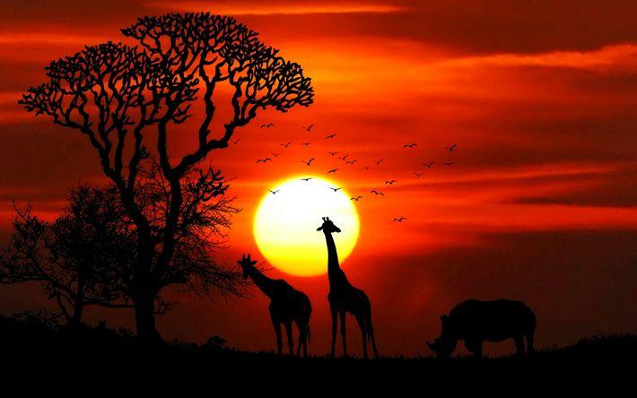 Hämta bilder Afrika, vilda djur, 4k, giraffer, noshörningar, sunset, orange sunset, djur silhuetter
