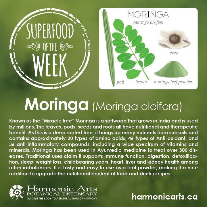 """Moringa- Known as the """"Miracle tree"""" Moringa is a softwood that grows in India and is used by millions. The leaves, pods, seeds and roots all have nutritional and therapeutic benefit. As this is a deep rooted tree, it brings up many nutrients from subsoils and contains approximately 20 types of amino acids, 46 types of Anti-oxidant, and 36 anti-inflammatory compounds, including a wide spectrum of vitamins and minerals."""