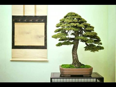 DEMONSTRATION     OF   CARRING     BONSAI