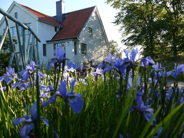 Vita Huset and Iris flowers