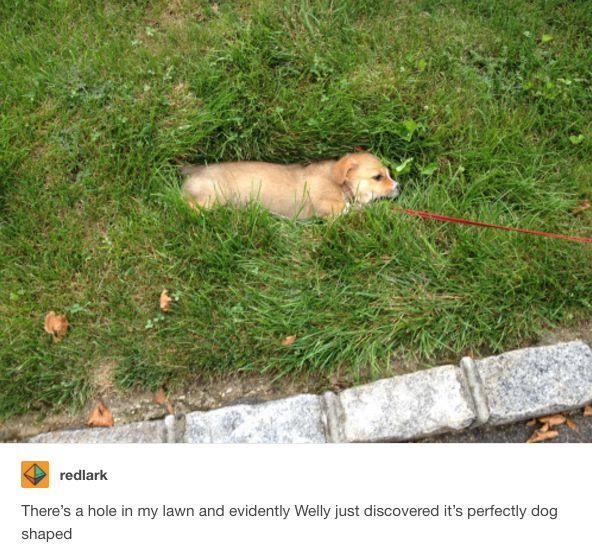 23 Tumblr posts about dogs you can not watch without smiling