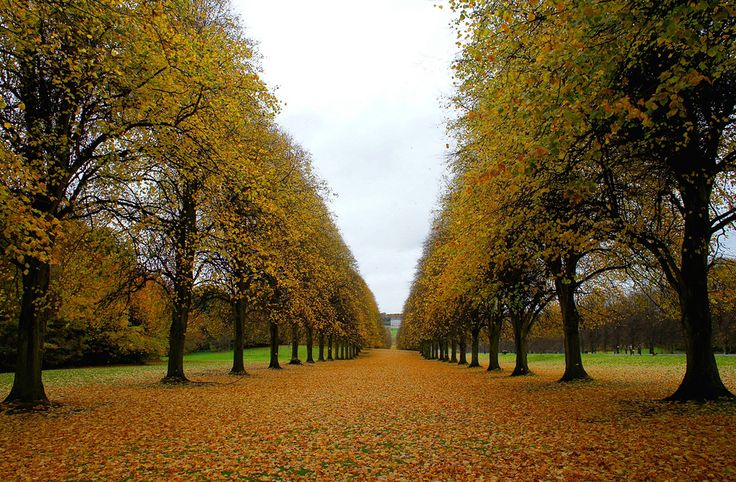 Photo of the Moment: Along the Tree Line, Belfast, Northern #Ireland #travel | Via Vagabondish