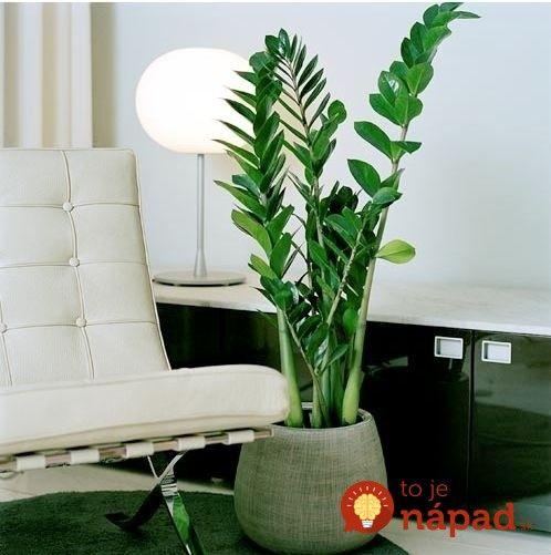 Táto rastlina pochádza z ďalekého Madagaskaru a ľudia veria, že nie je len tak obyčajnou rastlinkou. Toto je dôvod.