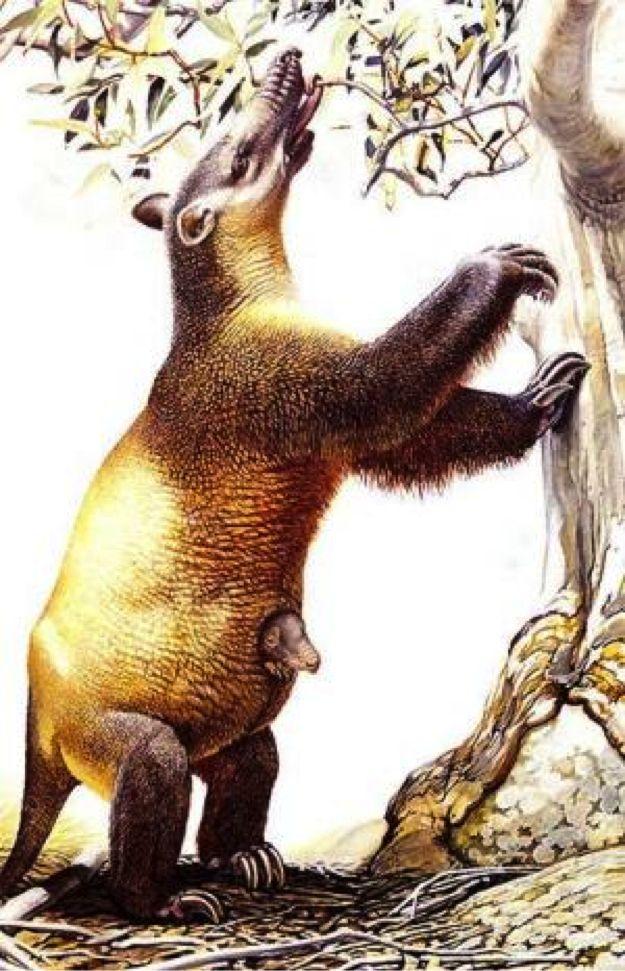 Artist's reconstruction of the recently extinct Tasmanian