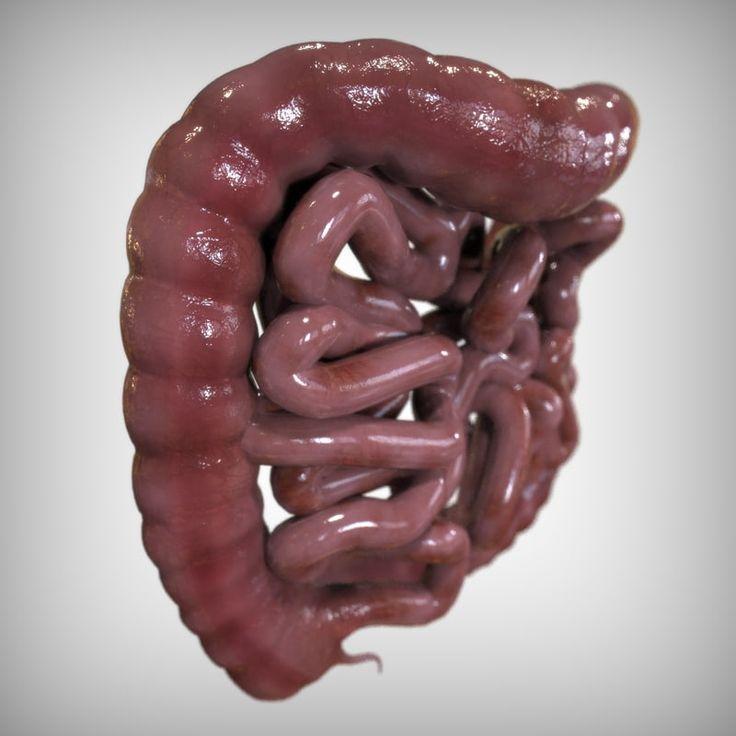 Смотреть кишечник в картинках
