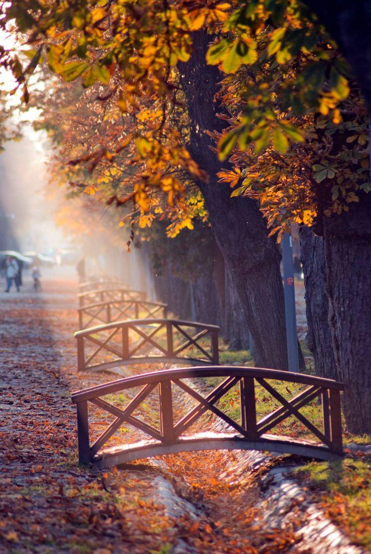 autumn park, cluj-napoca, romania | travel photography