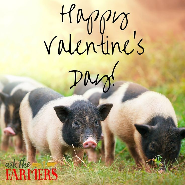 Farmers Day Quotes: 200 Best Images About Agriculture Quotes & Sayings On