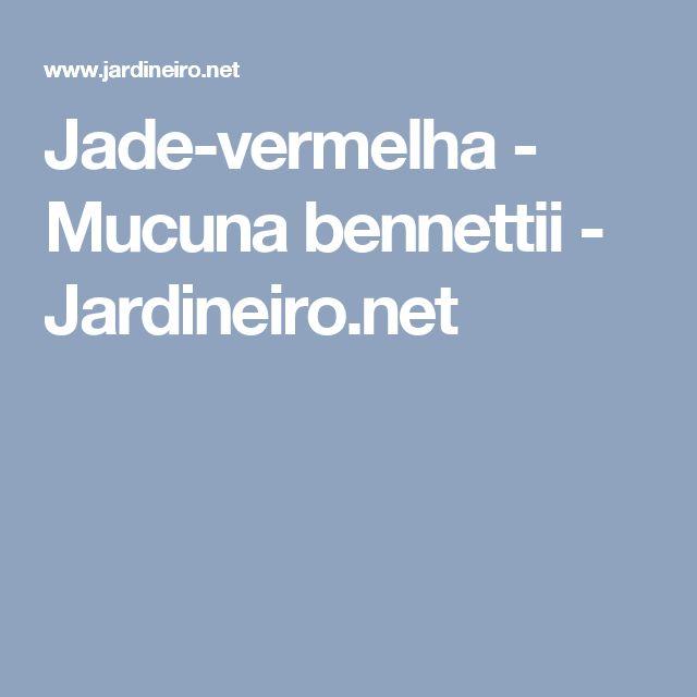 Jade-vermelha - Mucuna bennettii - Jardineiro.net
