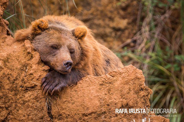 Do not disturb by Rafa Irusta