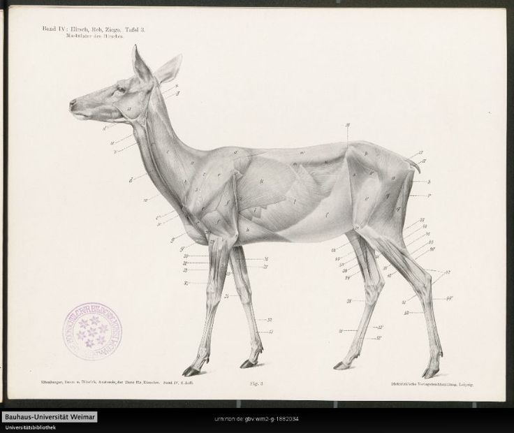 10 best n images on Pinterest | Animal anatomy, Anatomy reference ...