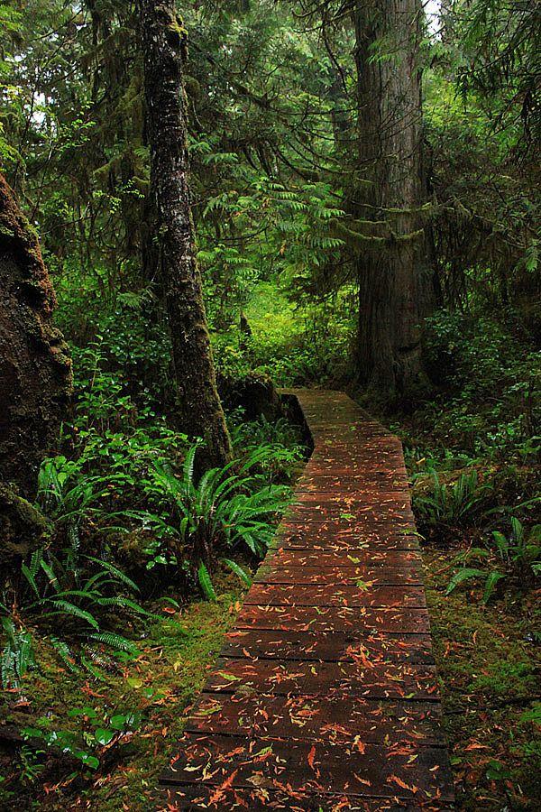 Boardwalks along the Half Moon Bay Trail