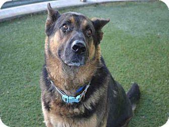 Van Nuys, CA - German Shepherd Dog. Meet BIG BROTHER, a dog for adoption. http://www.adoptapet.com/pet/18545253-van-nuys-california-german-shepherd-dog