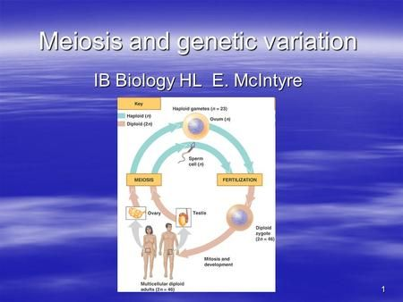 1 Meiosis and genetic variation IB Biology HL E. McIntyre.>