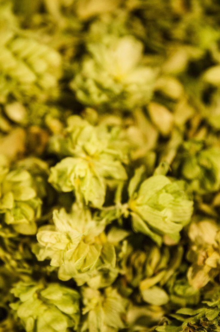 La birra non ha bisogno di nessuna modifica per attestarsi a prodotto 100% Veg. Luppoli, malti, lieviti e acqua sono 'etici' da millenni e la loro 'unione' si sposa perfettamente con questa crescente tendenza. #birraiotadoro #veg