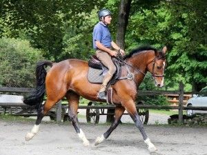"""The most overlooked fundamental in flat training.  """"Straightness is the basic essential of all training and the one that is overlooked the most. It's the first thing that I feel for when I get on a new horse and is a skill that I keep honing throughout its career. Basically, straightness creates balance, rhythm and power,"""" says von Buttlar.  """"I think people fixate on the horse's head carriage, which at the end is important, but first you have to make sure your horse is going straight and…"""
