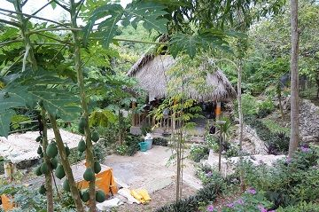 The organic garden at the FNPF volunteer center on Nusa Penida, Bali
