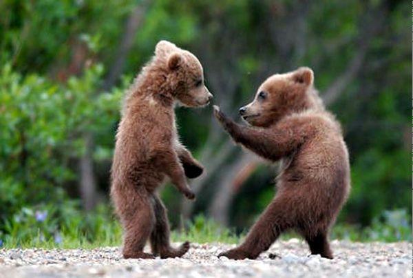 Bärenbrüder ...eigenen Aufkleber drucken lassen!