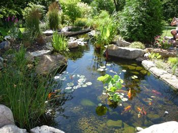 144 best fountains ponds images on pinterest garden for Koi pool opening times