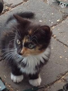 Två underbara kattungar 1000:- Norrtälje