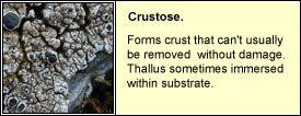 crustose