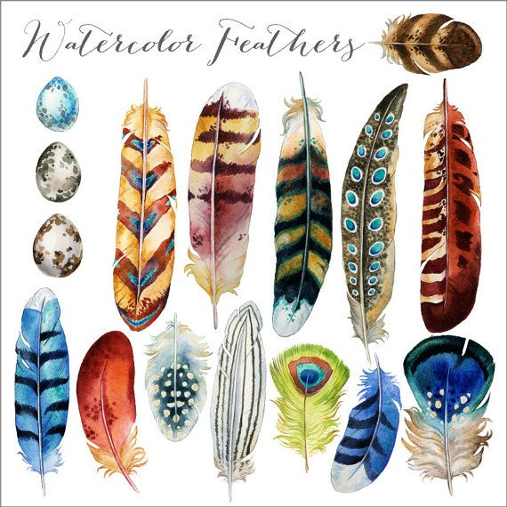 Watercolor Feathers Clipart: Instant download by VerdigrisStudios