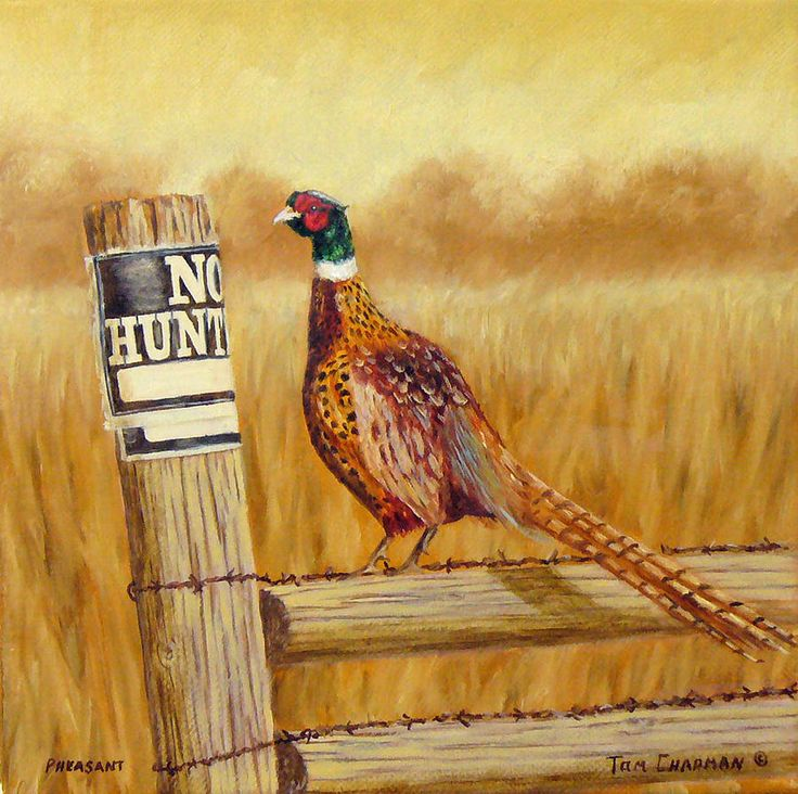No Hunting Pheasant by Tom Chapman - No Hunting Pheasant Painting ...