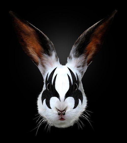 pensieri-casuali:    Kiss of a Rabbit  by Robert Farkas