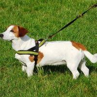 #dogalize Pettorina per cani: i modelli e come funziona #dogs #cats #pets