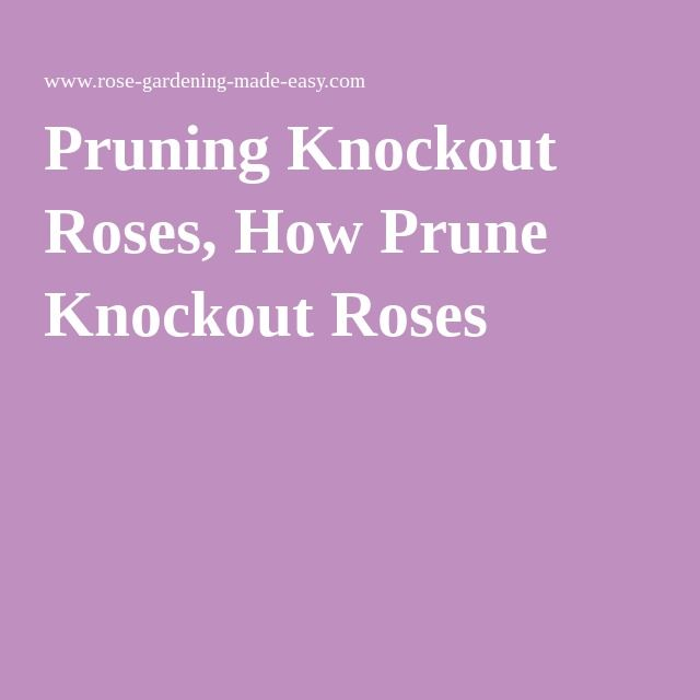 Pruning Knockout Roses, How Prune Knockout Roses