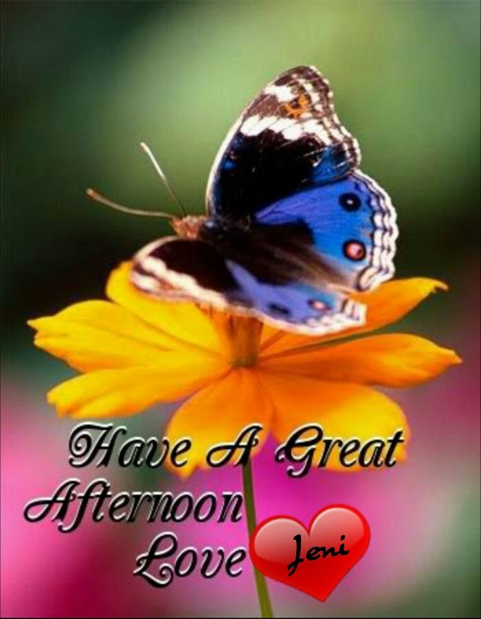 Good Afternoon Everyone Have A Nice Time Good Morning