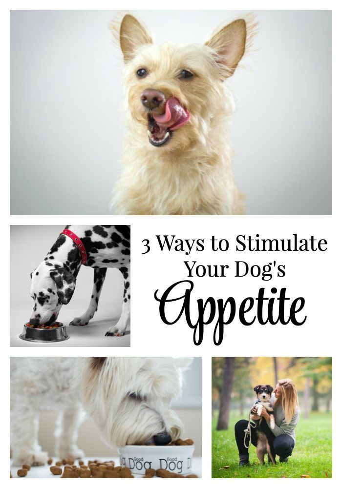 If Your Dog S Appetite Has Decreased Significantly Or She S